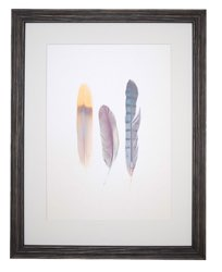 framed poster of feathers
